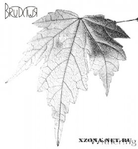 Brudywr - Withering (2011)